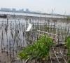 Yuk Simak ! 15 Fungsi Hutan Mangrove Bagi Konservasi Daerah Pesisir