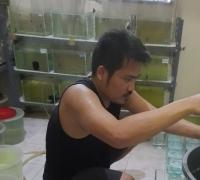 Sepuluh bulan Covid-19 menyerang, Karyawan swasta di Riau sukses budidaya Ikan Hias hingga tembus pasar benua Amerika